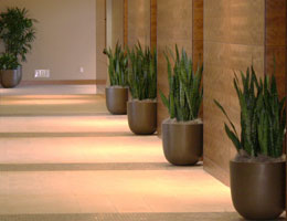 Office Plants Go Green With Interior Plants For Your Office